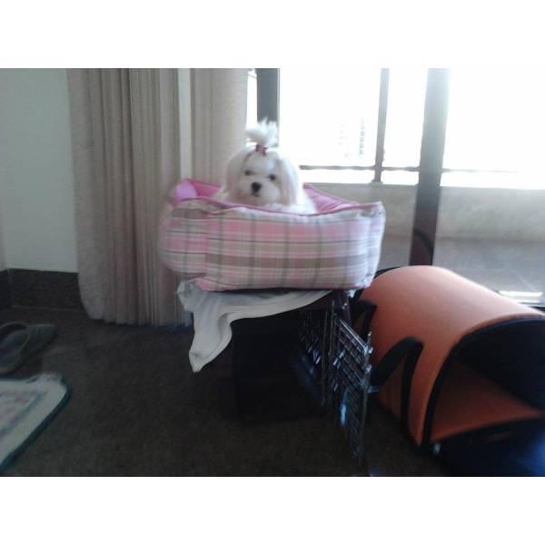 Achar Adestrador para Cachorro no Aeroporto - Empresa de Adestradores