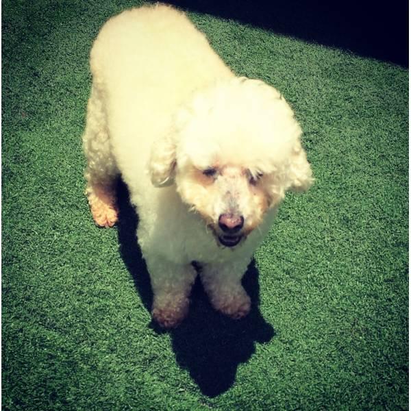 Achar Adestrador para Cachorros na Cidade Ademar - Adestrador de Cãesna Vila Olímpia