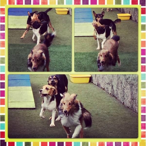 Achar Adestrador para Cachorros no Ibirapuera - Adestrador de Cãesna Vila Olímpia