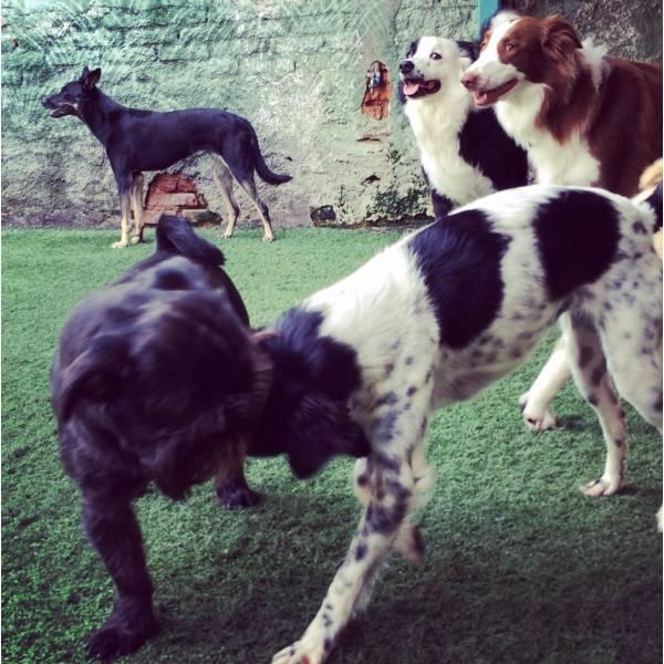 Achar Adestrador para Cães no Jardim América - Adestrador de Cãesna Vila Olímpia