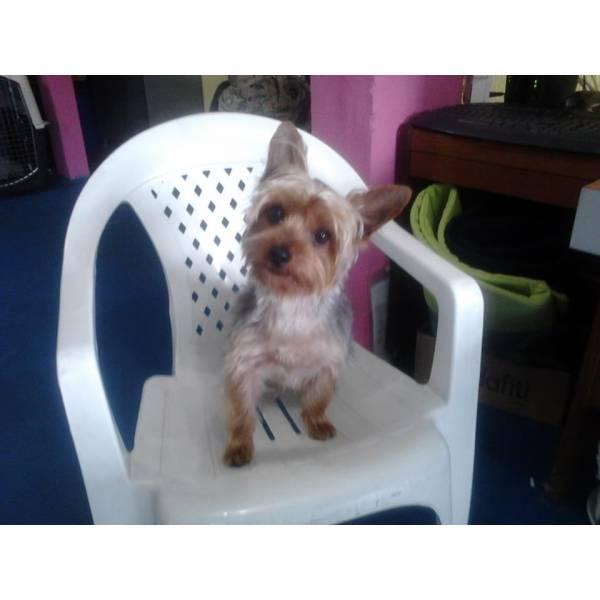 Achar Adestrador para Cães no Rio Pequeno - Serviço de Adestrador de Cachorro