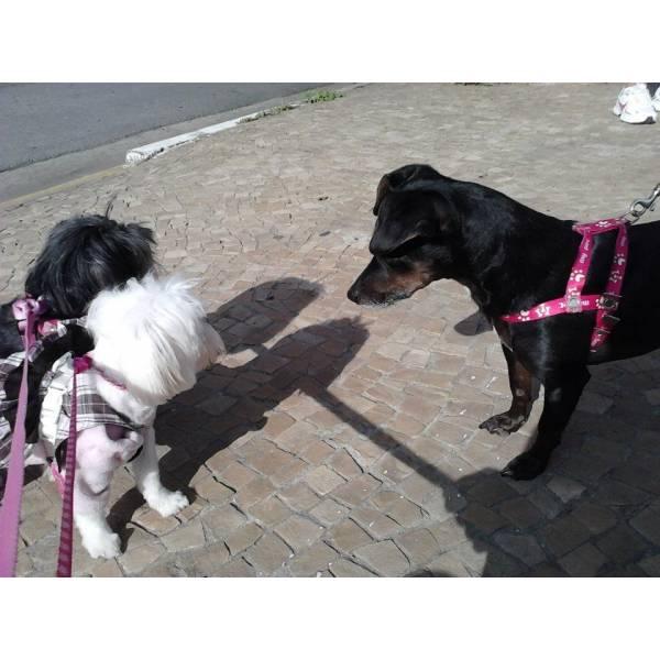 Achar Adestrador para Cão em Itapevi - Serviço de Adestrador de Cachorro