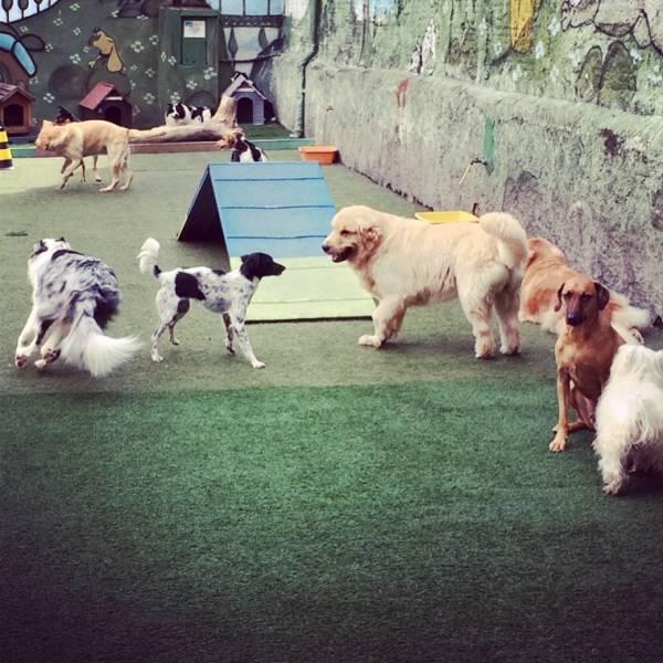 Achar Adestrador para Cão na Saúde - Adestrador de Cãesna Vila Olímpia