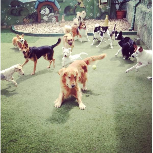 Achar Adestradores para Cachorro em Embu das Artes - Adestrador de Cãesem Pinheiros