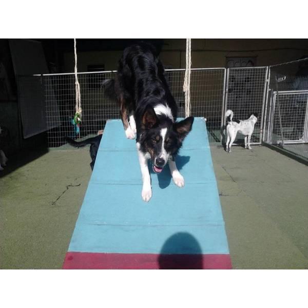 Achar Adestradores para Cachorro no Jardim América - Adestrador de Cães