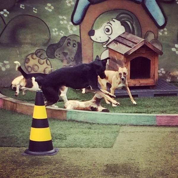 Achar Adestradores para Cachorro no Jardim São Luiz - Adestrador de Cãesem Pinheiros