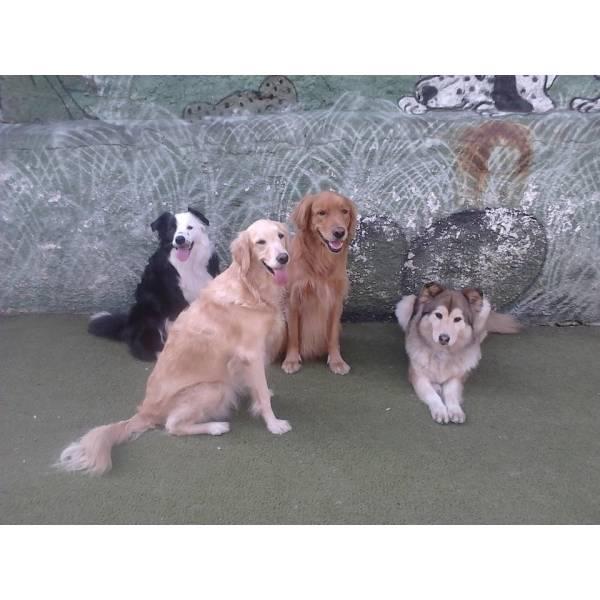 Achar Adestradores para Cachorro no Pacaembu - Adestrador de Cãesem São Paulo