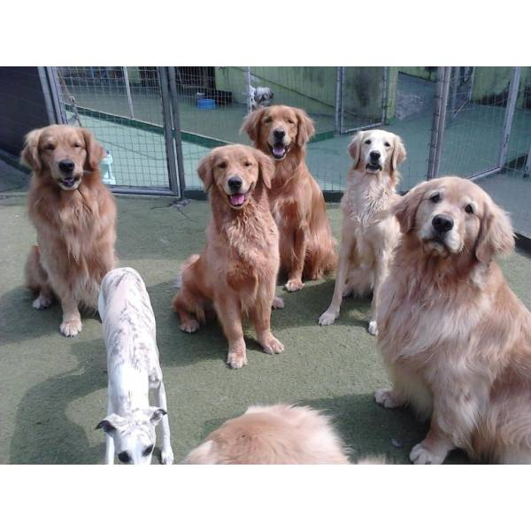 Achar Adestradores para Cães no Alto de Pinheiros - Serviço de Adestrador de Cachorro