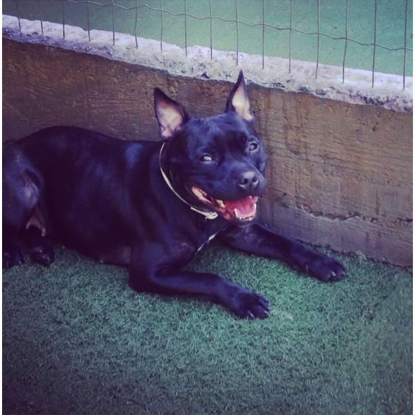 Achar Adestradores para Cão na Cidade Jardim - Adestrador de Cãesna Vila Olímpia
