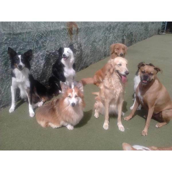 Achar Adestradores para Cão na Pedreira - Adestrador de Cãesem São Paulo