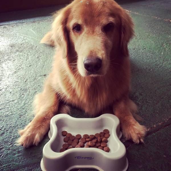 Achar Adestramento de Cachorros no Ibirapuera - Adestramento de Cães na Vila Olímpia