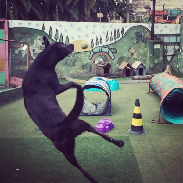 Achar Adestramento de Cães em Interlagos - Adestramento Cães