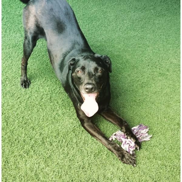 Achar Adestramento de Cão no Jardim São Luiz - Empresa de Adestramento de Cães