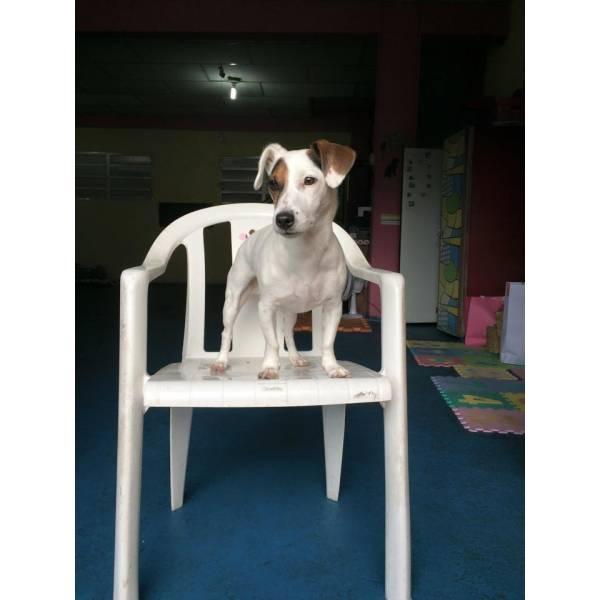 Achar Adestramento para Cachorros  no Jockey Club - Adestramento Cachorro