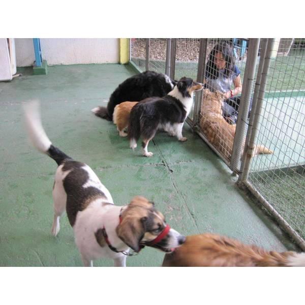 Adestrador para Cachorros no Pacaembu - Adestrador Canino Preço