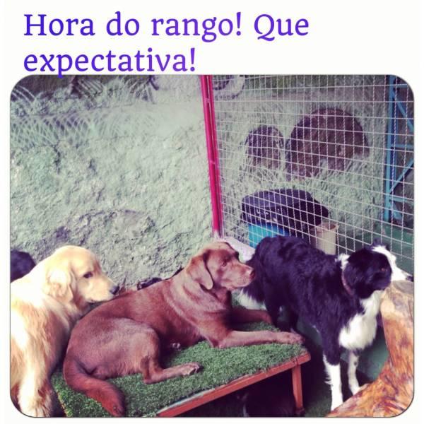 Adestrador para Cães em Sumaré - Adestrador de Cãesem Santo Amaro