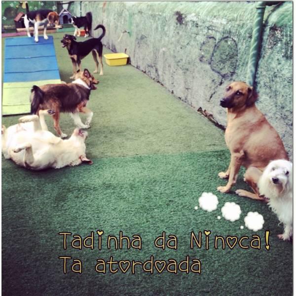 Adestrador para Cães no Jardins - Adestrador de Cãesna Vila Madalena