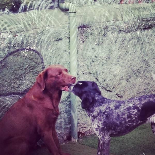 Adestrador para Cão na Vila Andrade - Adestrador de Cãesem Santo Amaro
