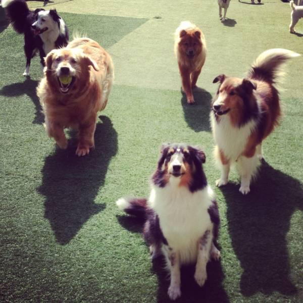 Adestradores  no Brooklin - Adestrador de Cãesno Itaim Bibi