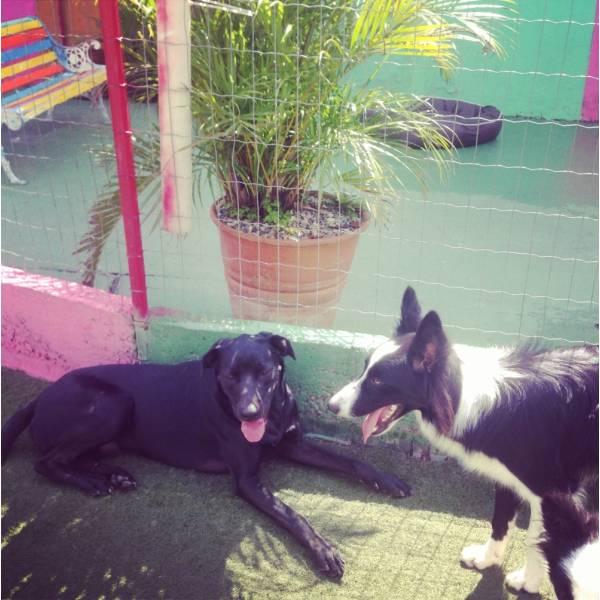 Adestradores para Cachorro em Vargem Grande Paulista - Adestrador de Cãesem Santo Amaro