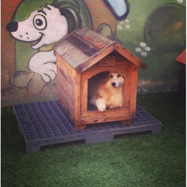 Adestradores para Cachorro na Cidade Dutra - Adestrador de Cãesna Vila Madalena