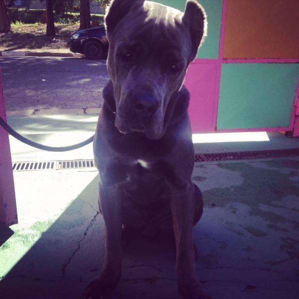 Adestradores para Cachorro no Jardim Bonfiglioli - Adestrador de Cãesem Santo Amaro