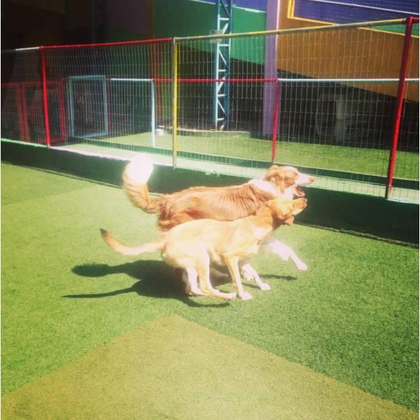 Adestradores para Cães na Cidade Dutra - Empresa de Adestradores de Cachorros