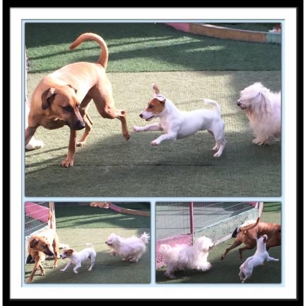 Adestradores para Cães no Ipiranga - Adestrador de Cãesna Vila Madalena