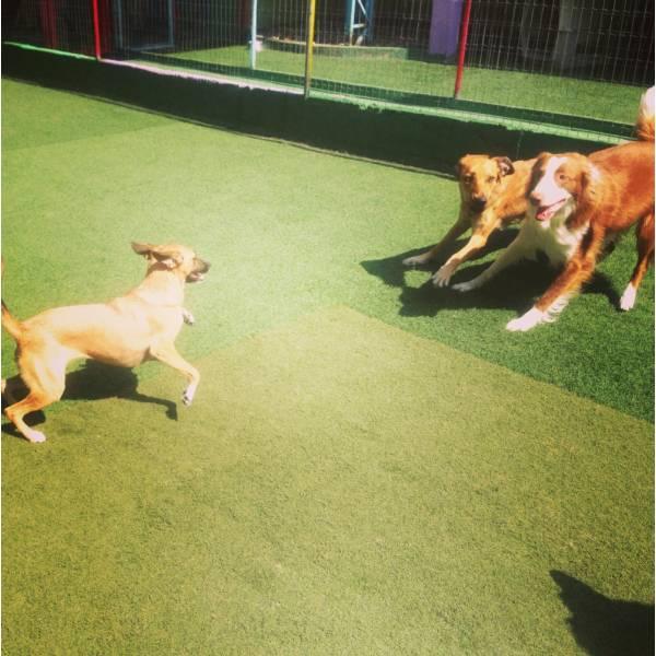 Adestradores para Cães no Jardim Paulistano - Adestrador de Cãesem Santo Amaro