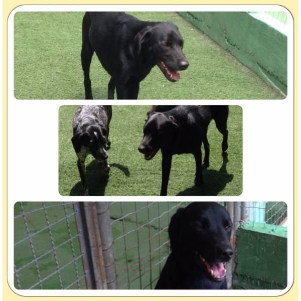 Adestradores para Cão no Butantã - Adestrador de Cãesem Santo Amaro