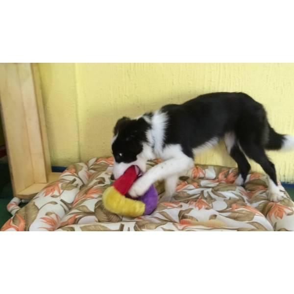 Adestramento Cãezinhos em Itapevi - Adestramento de Cães em Santo Amaro