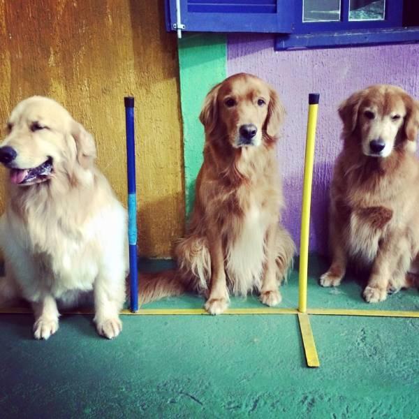 Adestramento de Cachorro no Itaim Bibi - Adestramento de Cães no Morumbi