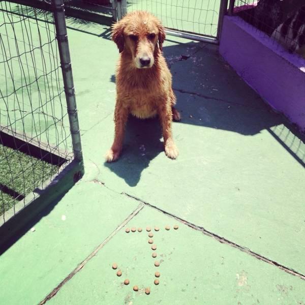 Adestramento de Cachorros no Ibirapuera - Adestramento Cachorro