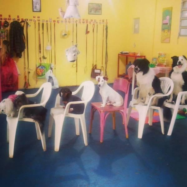 Adestramento de Cães em Jandira - Adestramento de Cães na Vila Olímpia