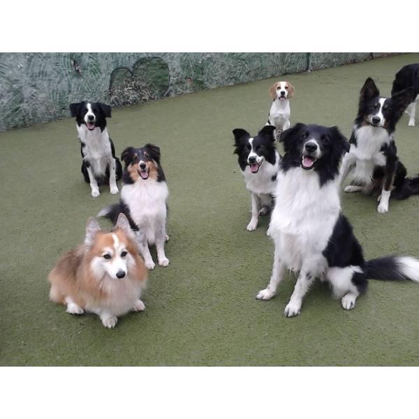 Adestramento de Cãozinho na Vila Andrade - Adestramento de Cães em Cotia