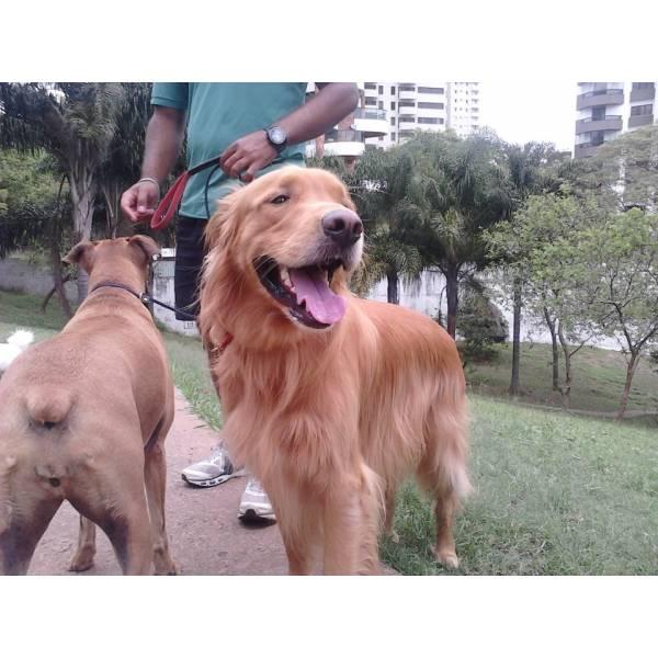 Adestramento de Cãozinho no Jardim Paulista - Adestramento de Cães em Cotia