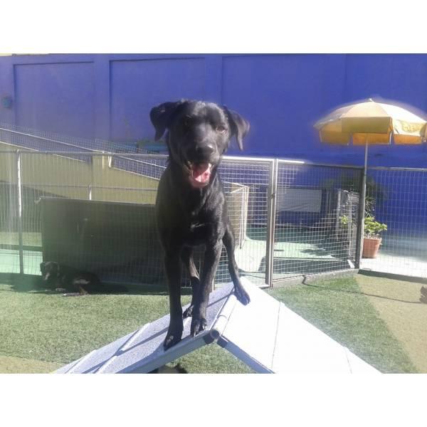 Adestramento de Cãozinho no Rio Pequeno - Adestramento de Cães em Pinheiros