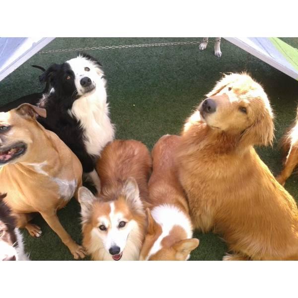 Adestramento em Taboão da Serra - Adestramento de Cachorro