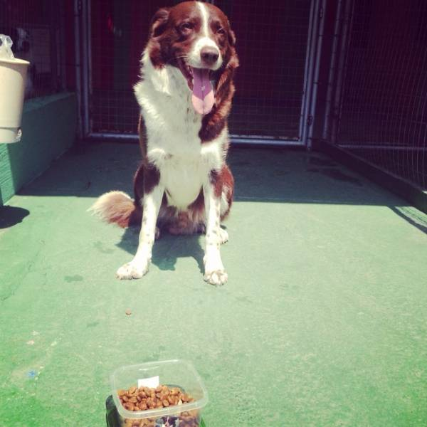 Adestramento para Cachorro no Jardim Bonfiglioli - Adestramento de Cachorro