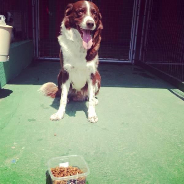 Adestramento para Cachorro no Jardins - Adestramento Cachorro