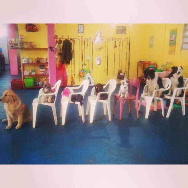 Adestramento para Cachorros em Cajamar - Adestramento de Cães em São Paulo