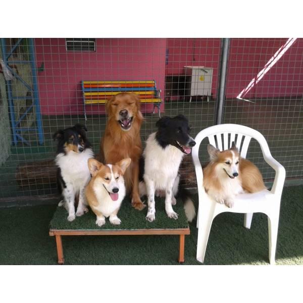 Adestramentos na Vila Sônia - Adestramento de Cachorro