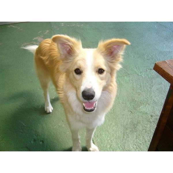 Adestrar Cãozinho  em Sumaré - Serviço de Adestramento de Cachorros