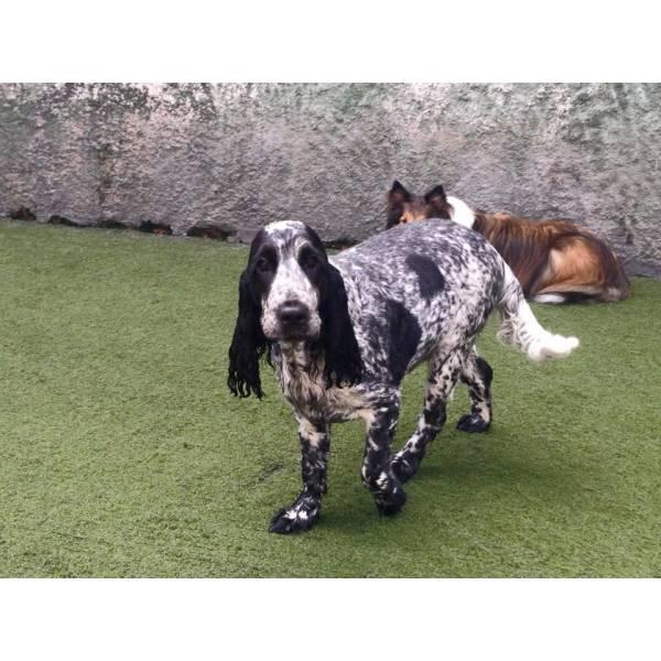 Daycare de Cachorro no Brooklin - Serviço de Daycare Canino