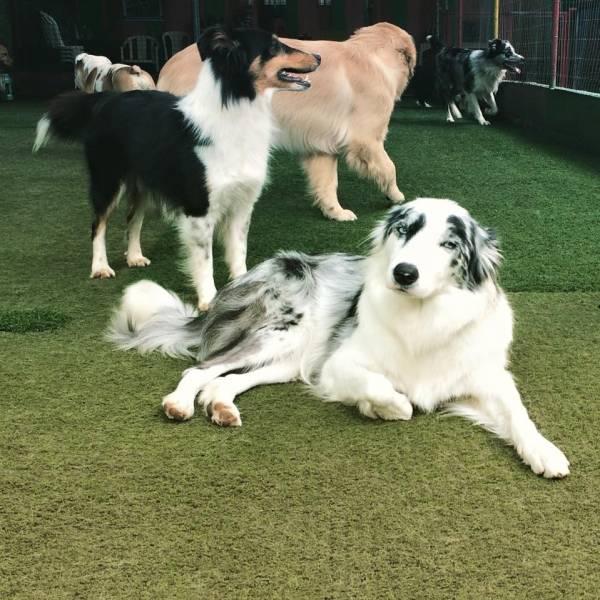 Daycare de Cachorros no Jardins - Serviço de Daycare Canino