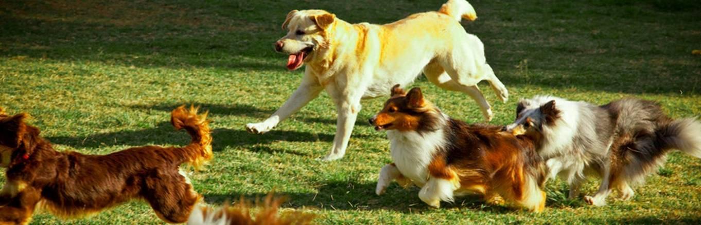 Dog World - Adestramento para Cães
