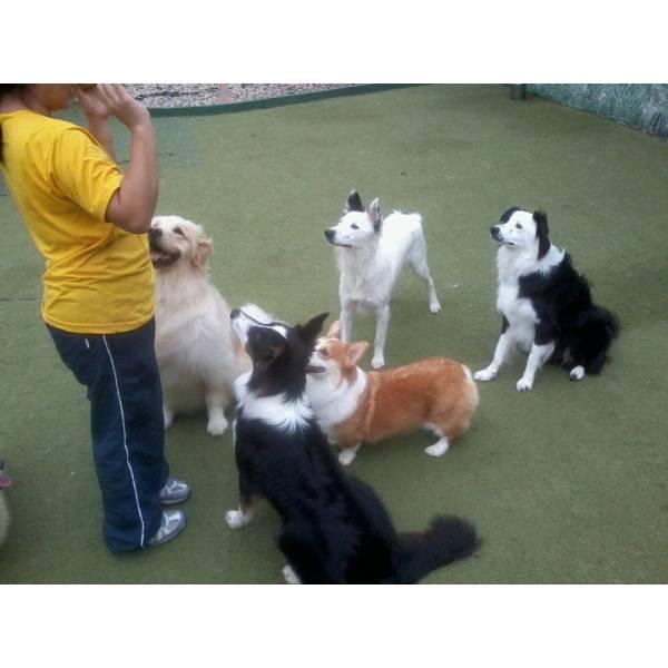 Empresa de Adestrador para Cachorro no Brooklin - Empresa de Adestradores de Cães