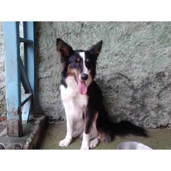Empresa de Adestrador para Cachorros em Raposo Tavares - Empresa de Adestradores de Cães