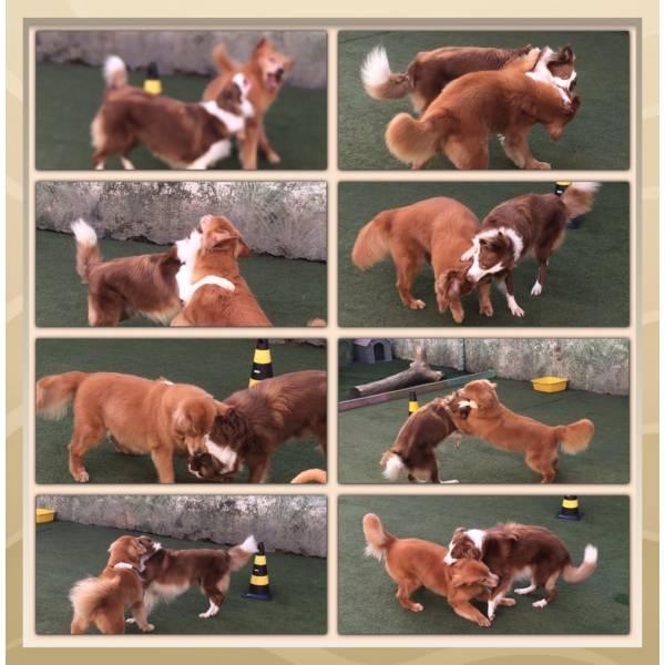 Empresa de Adestrador para Cães em Taboão da Serra - Adestrador de Cãesem Pinheiros