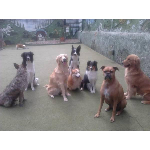 Empresa de Adestrador para Cão em Jandira - Empresa de Adestradores de Cães